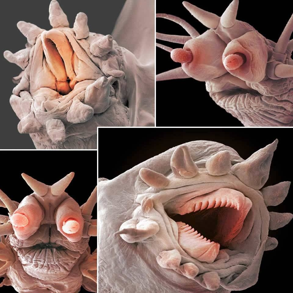 FREAKED OUT! These terrifying close ups of polychaetes and bristle are the worms that live in our deep seas.