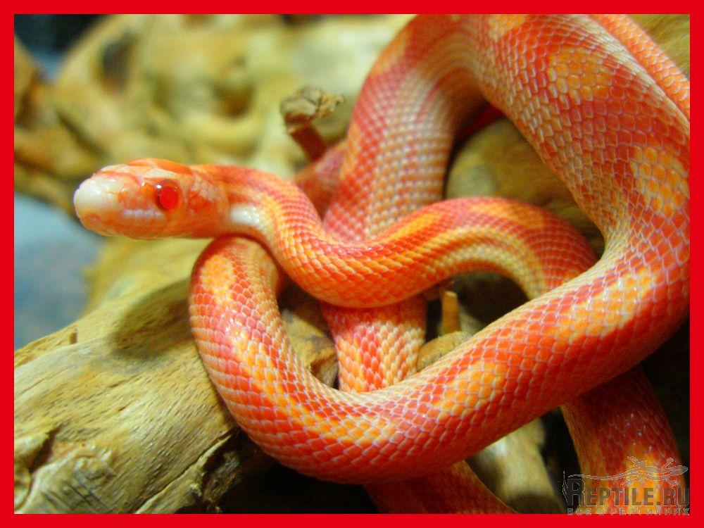 Фотографии змей и их названия