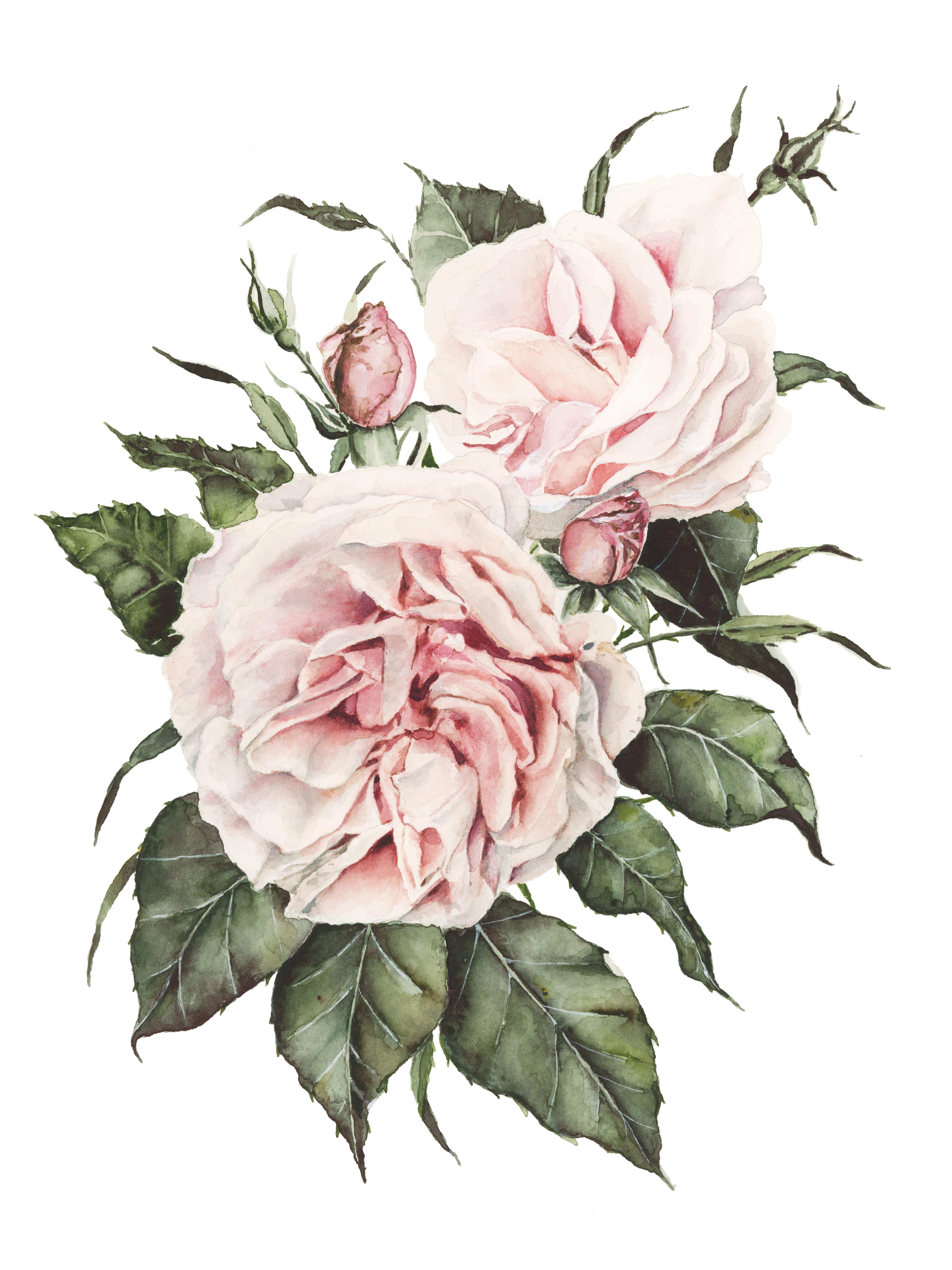 Garden Roses Watercolor Painting Print Watercolor Rose Botanical Artwork Tapestry