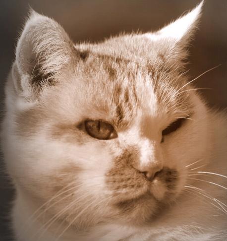 Pin On 6000 Great Cat Pics