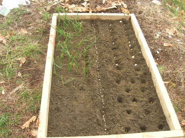Bordure per orto cerca con google giardino piante for Bordure aiuole plastica