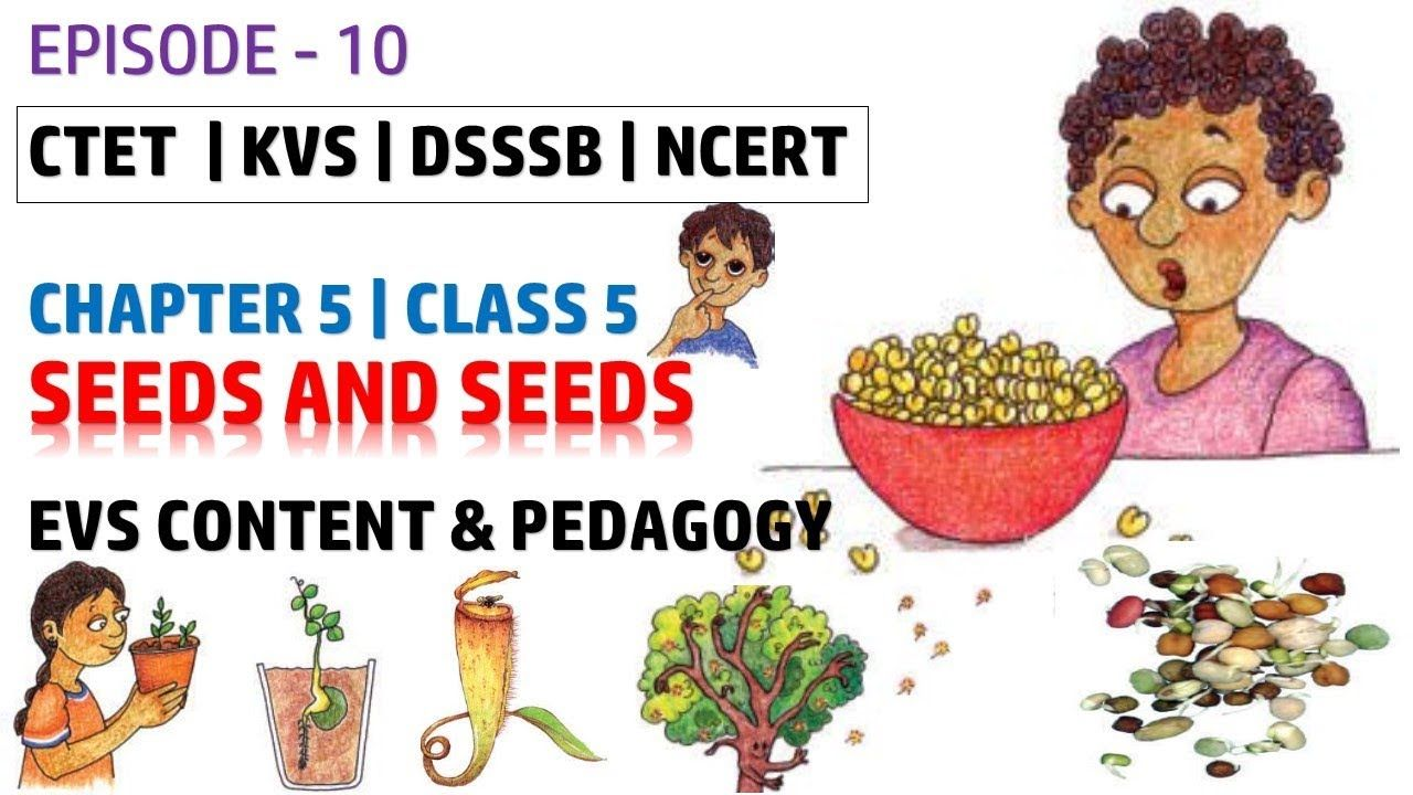Ep 10 Seeds And Seeds Evs Content And Pedagogy For Class 5 Chapter Pedagogy Chapter Class