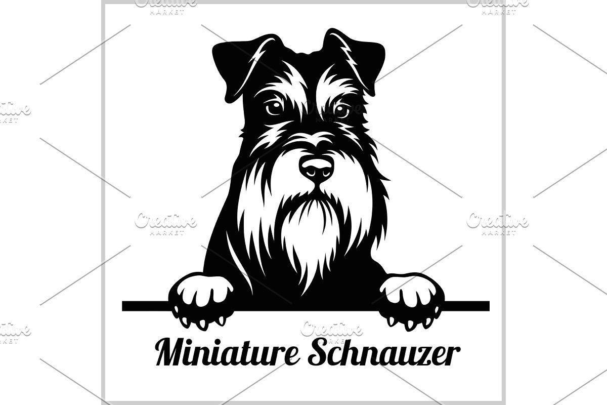 Miniature Schnauzer Peeking Dogs Schnauzer Dog Paintings Miniature Schnauzer