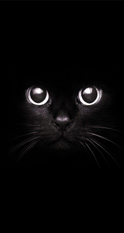 Cute Black Cat Wallpaper Iphone Animal Wallpaper Cat Wallpaper Cat Art