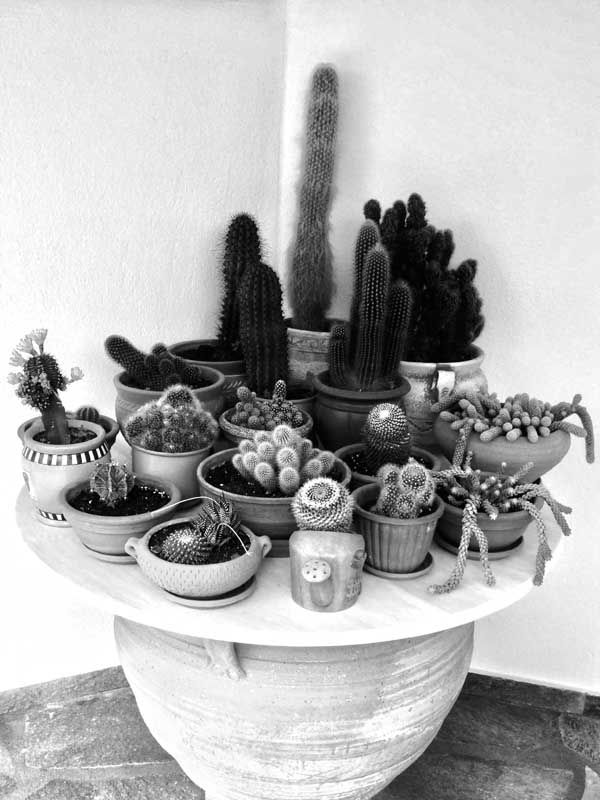 classy pictures of cactus house plants. Explore Mini Cactus  Interior Garden and more cacti HOME is where your heart Pinterest Cacti Plants
