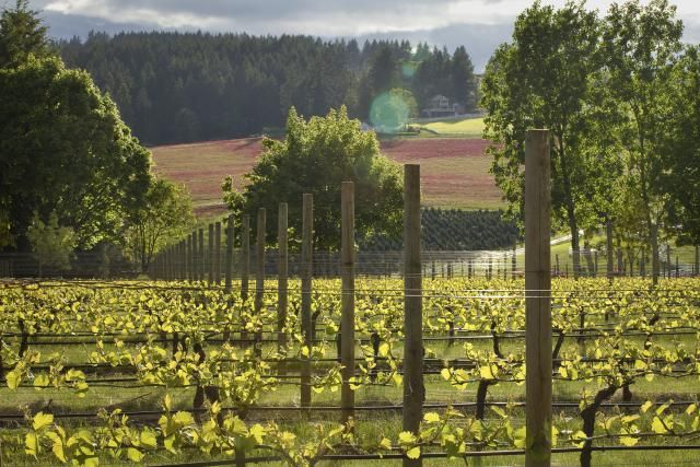 Alternatives to Napa and Sonoma: Wine Tasting Around America