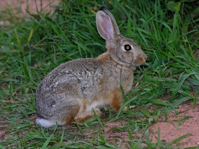 How To Keep Rabbits From Eating Your Flowers With Images Rabbit Repellent Rabbit Garden Rabbit Traps