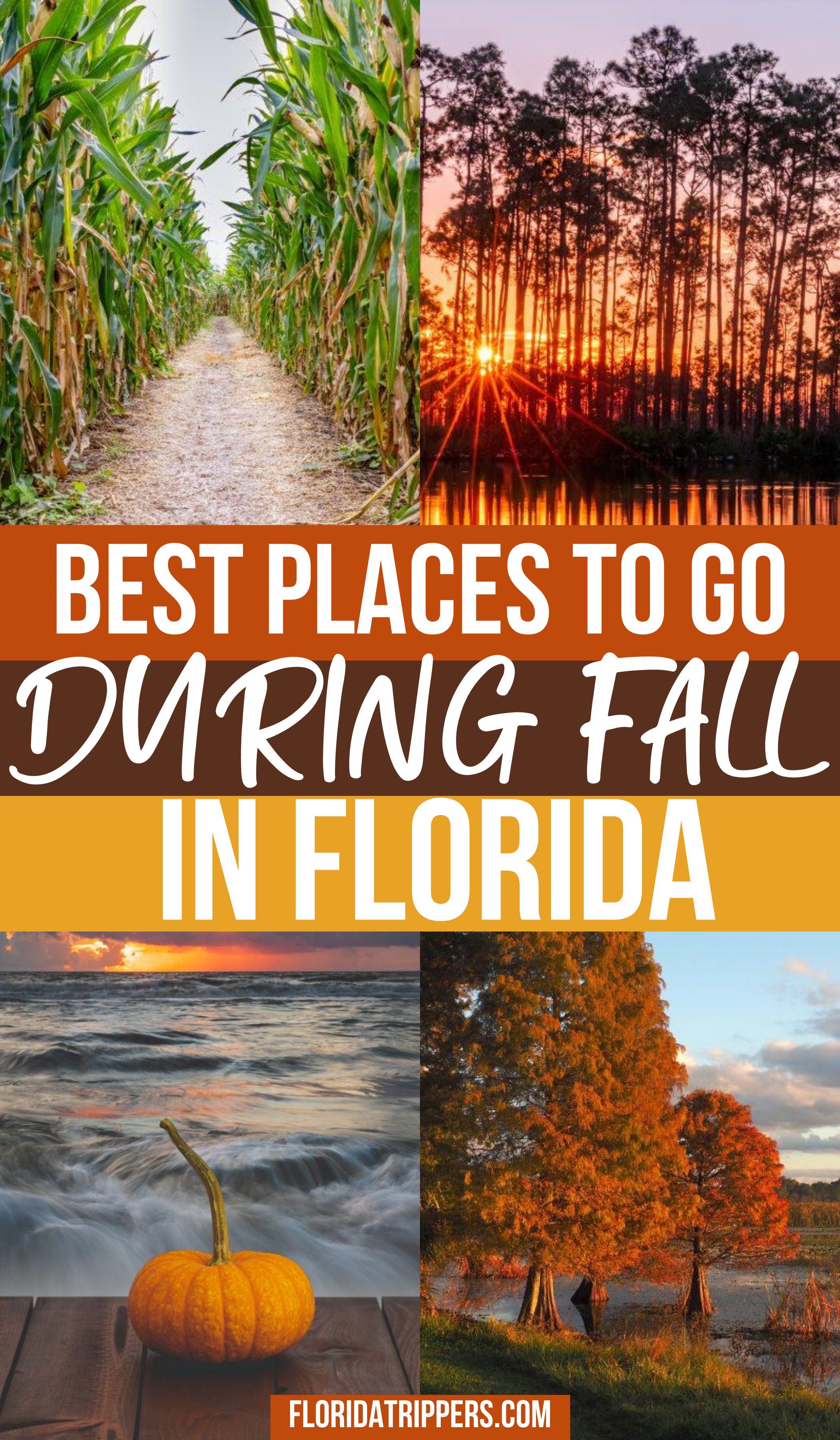Florida In Fall What To Do And Where To Go Fall Travel Fall Road Trip Florida Travel