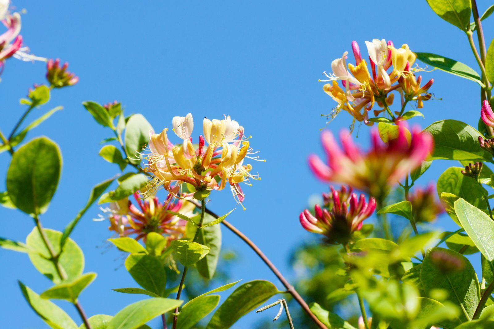Insektenfreundliche Kletterpflanzen für den Garten - Plantura