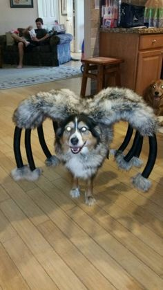 Mutant Giant Spider Dog Costume By Digginitdesigns On Etsy Dog