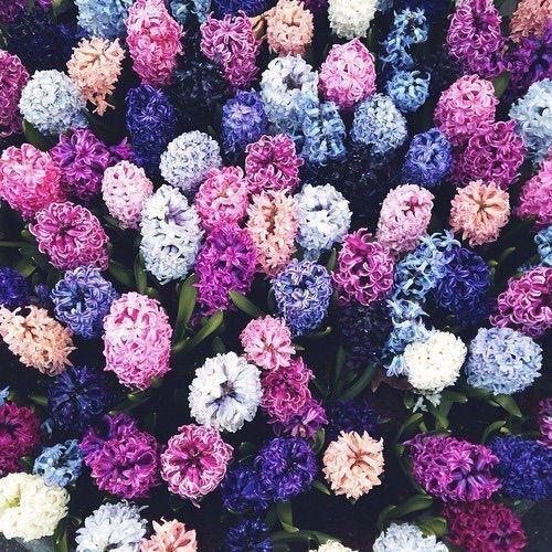Ontdek En Deel De Mooiste Afbeeldingen Van Over De Hele Wereld Prachtige Bloemen Bloemen Planten