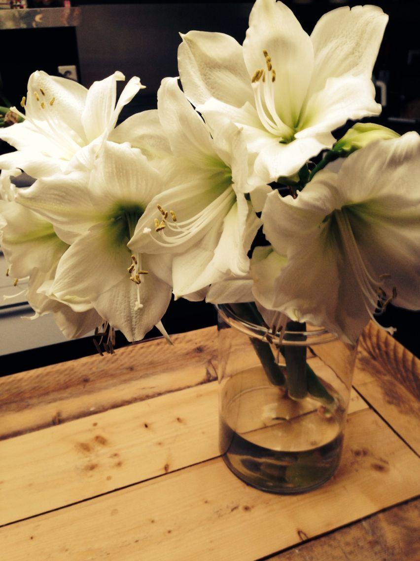 #Amaryllis #Beauty #HomeSweetHome #Kitchen Flowers