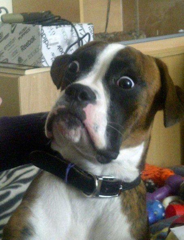Blankie The Shocked Dog Blank Meme Template  Bruce