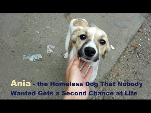 Homeless Dog That Nobody Wanted Gets A Second Chance At Life Homeless Dogs Dogs Animal Rescue Stories