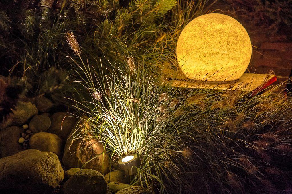 Gräser im Lichtspiel