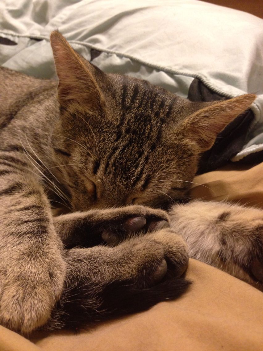 60 Clever Calico Cat Names You'll Adore Calico cat names
