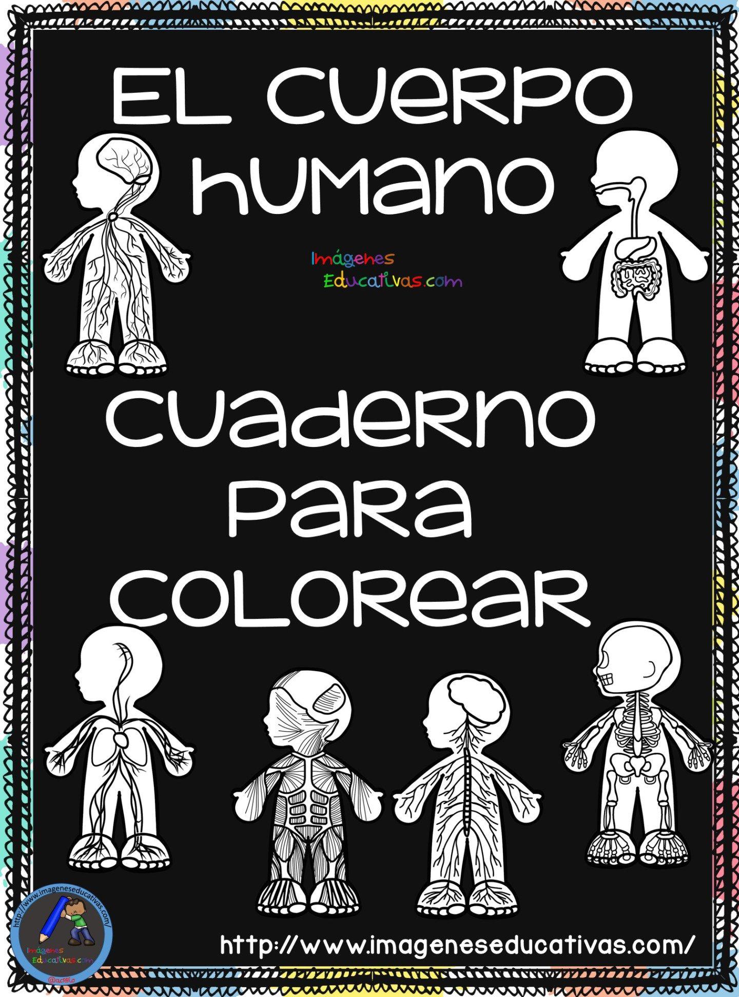 Cuaderno para colorear El Cuerpo Humano (1 | Cuerpo humano, Aparatos del cuerpo  humano y Sistemas del cuerpo humano
