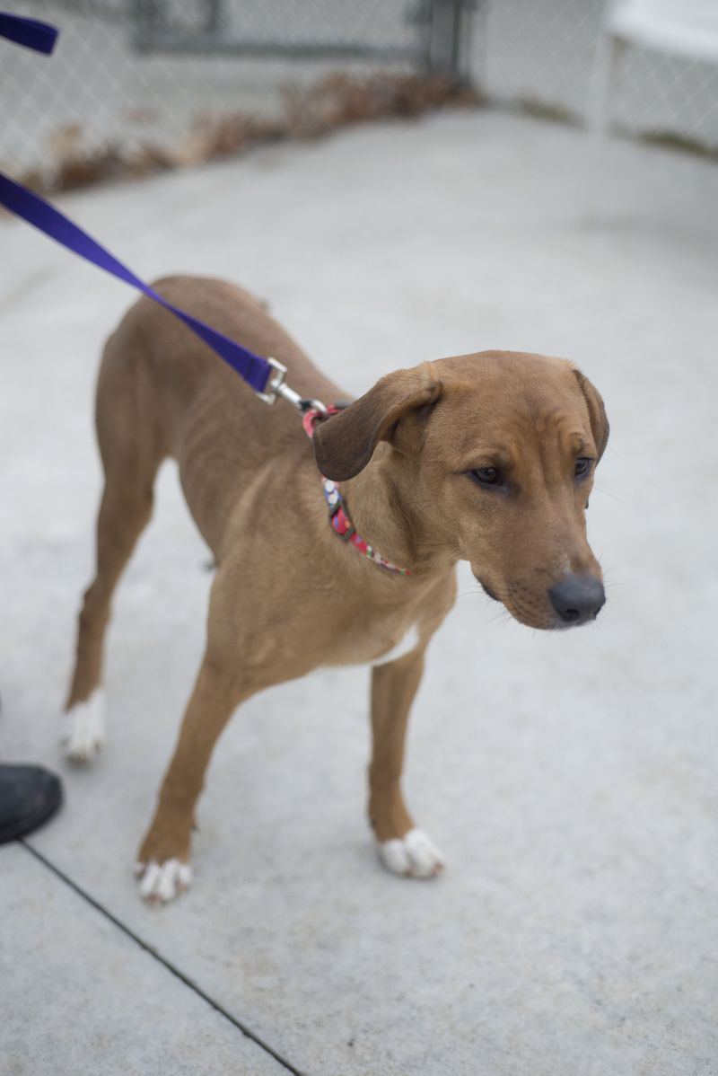 Urgent Lovable Taylor Swift Very Sweet Girl Is Now Available For Adoption She Was Found In Canton But Her Owner Has Not Come Adoption Dog Adoption Poor Dog