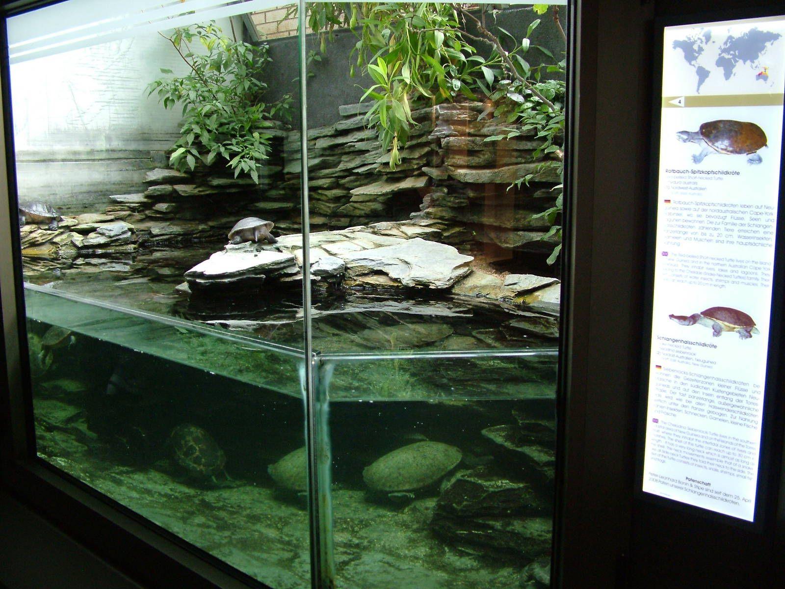Turtle Terrarium Ideas  Google Search