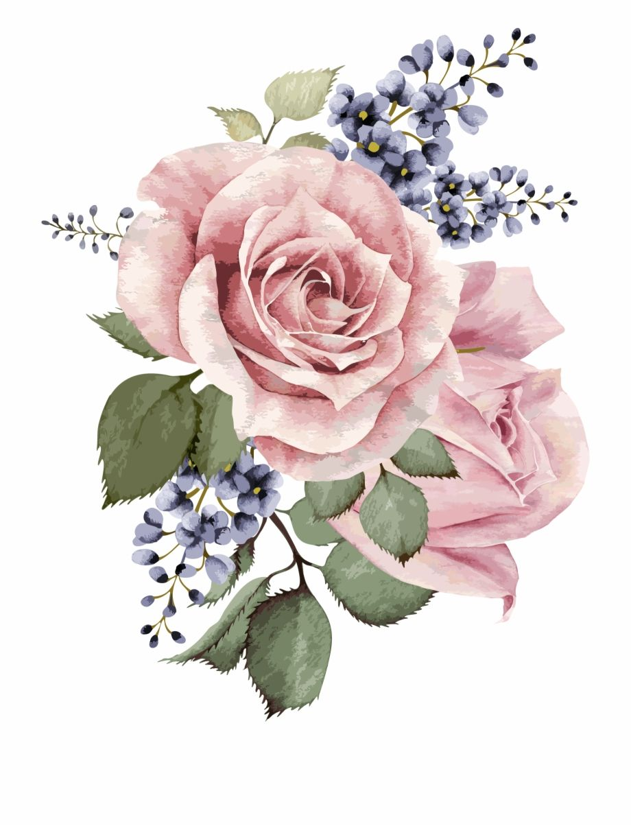 Watercolor Flower Png Transparent Background Watercolor Old Rose