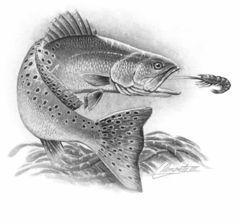 It is a graphic of Crush Realistic Fish Drawing
