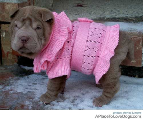I Am Not A Fan Of Dressing Dogs But This Is Just So Cute Puppy