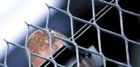 it can be used as gutter mesh,and security fence