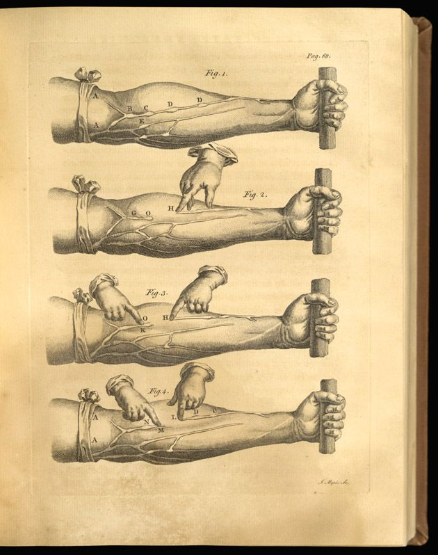 Drawing of William Harvey\'s blood circulation | World History ...