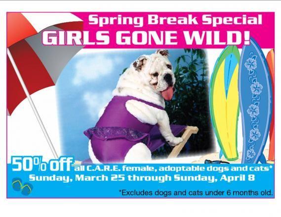 Colorado Animal Rescue Glenwood Springs Animal Rescue Animal Shelter Dog Adoption