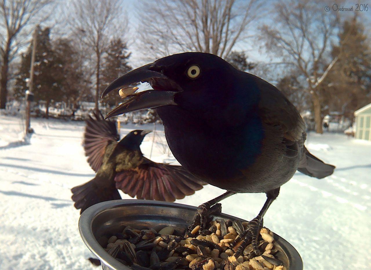 Žena kŕmi vtáky v záhrade a získava tak tieto perfektné zábery - Vedelisteze.sk