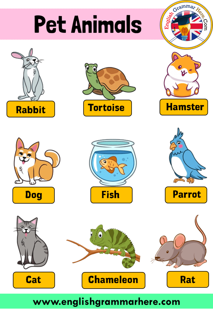 English Pet Animals Names Definition And Example Sentences Pet Animals Names In This Lesson We Will Examine In 2020 Pet Names Animals Name In English English Grammar