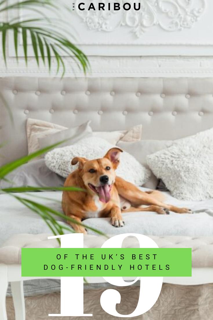 19 Of The Uk S Best Dog Friendly Hotels Dog Friends Dog Friendly Hotels Uk Dog Friendly Hotels