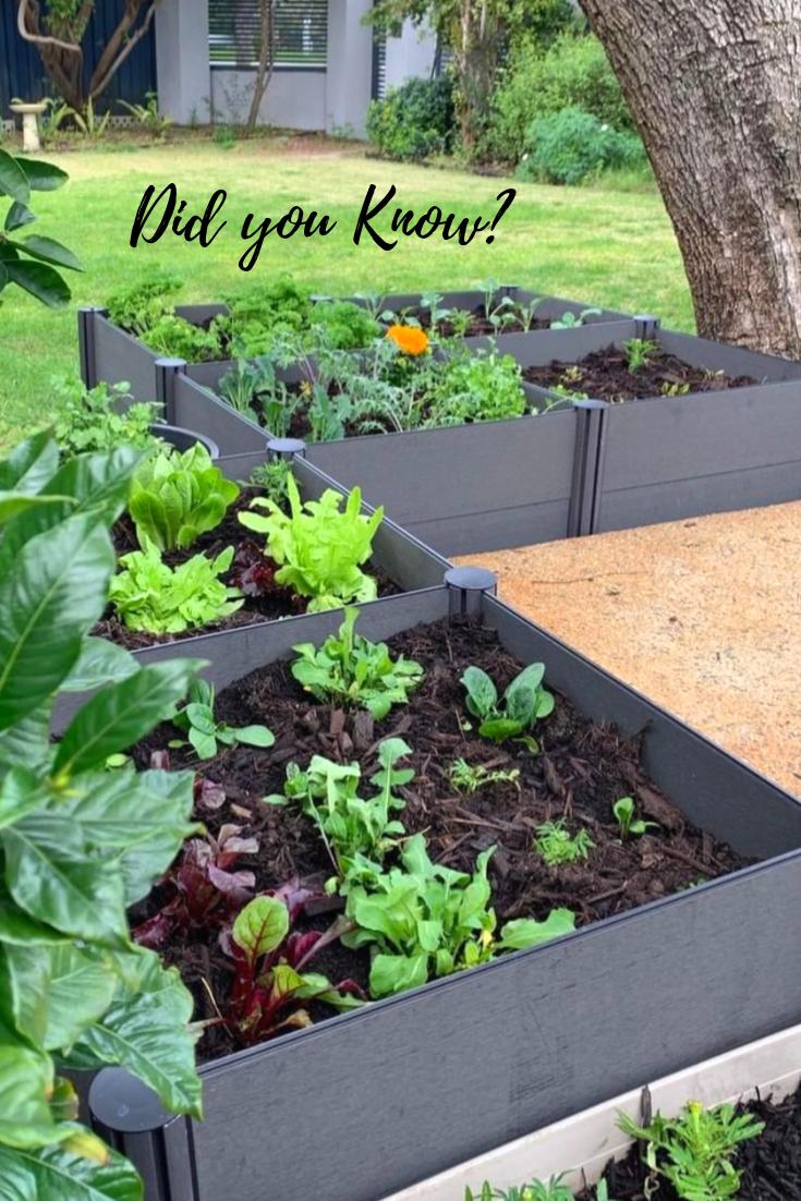 How To Get Rid Of Nematodes In The Vegetable Garden