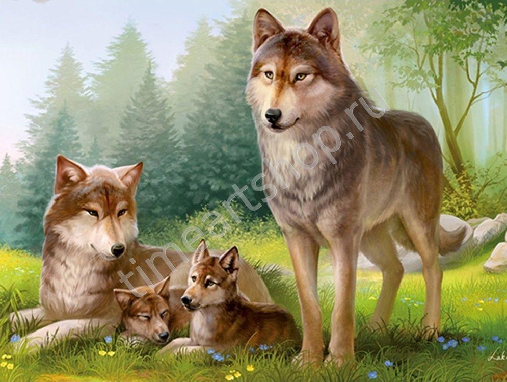 Семейство волков, картины раскраски по номерам, размер 40 ...