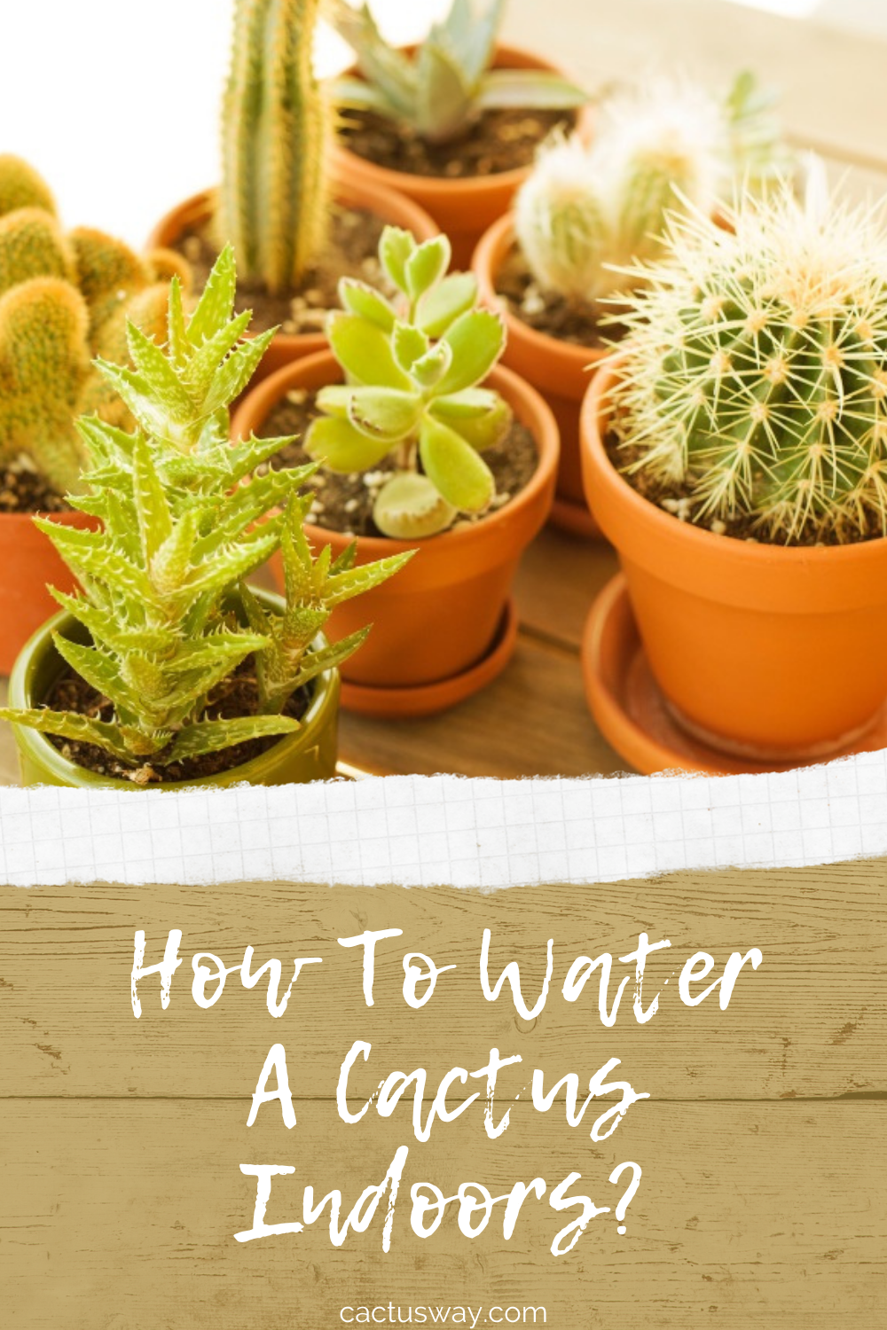 How To Water A Cactus Indoors Common House Plants Growing Succulents Plant Care