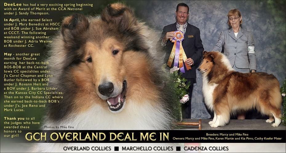 Pin By Cindy Dorsten On Collies Animals Dogs Collie