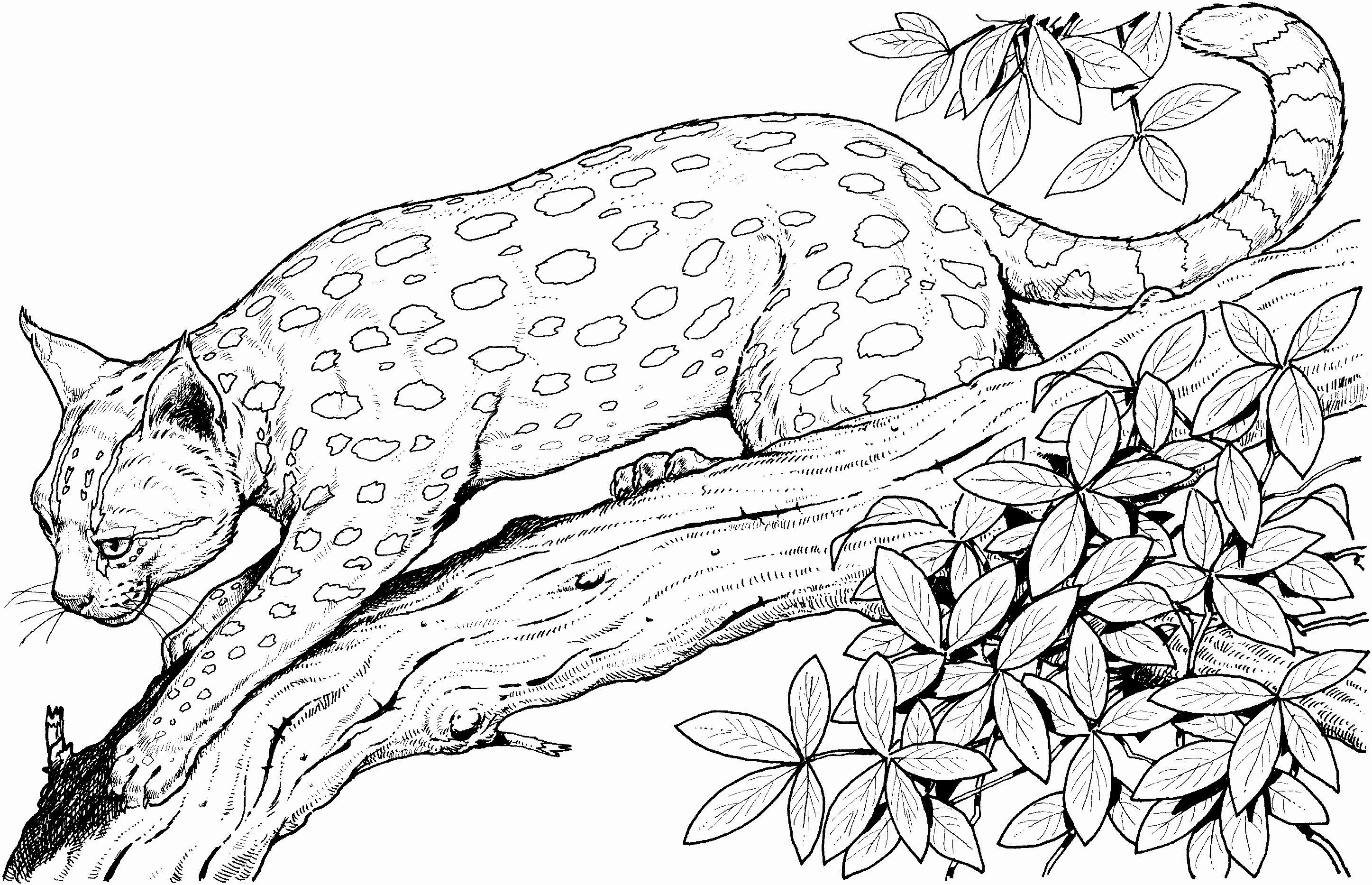 Cheetah Coloring Pages Elegant Cute Baby Cheetah Coloring Pages Coloring Home Jungle Coloring Pages Cat Coloring Page Animal Coloring Pages