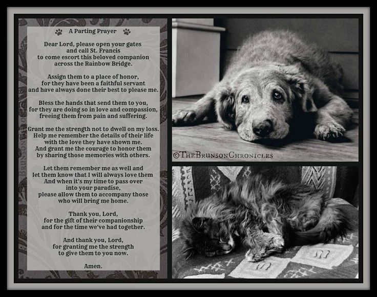 Image result for prayers for pets who have been euthanized
