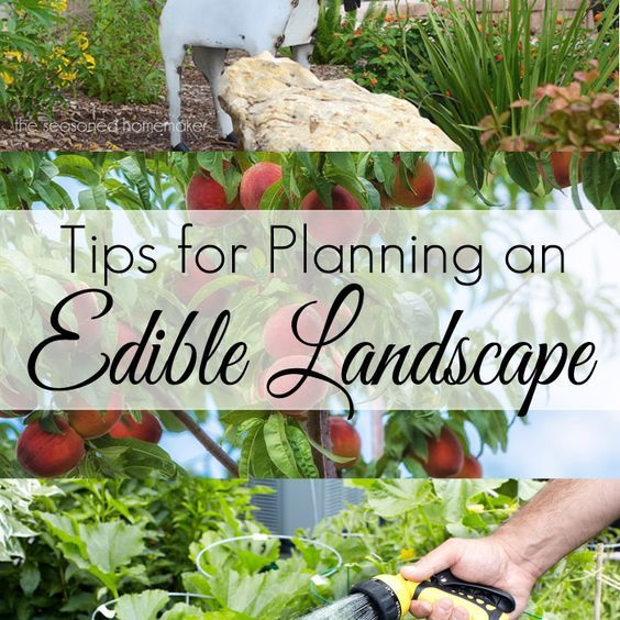 Creating Our First Vegetable Garden Advice Please: Tips For Planning An Edible Landscape