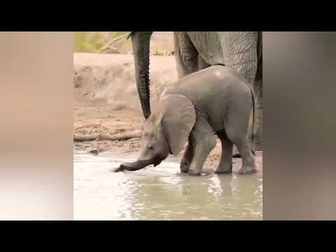 Young Elephants learning how to Elephant! - YouTube