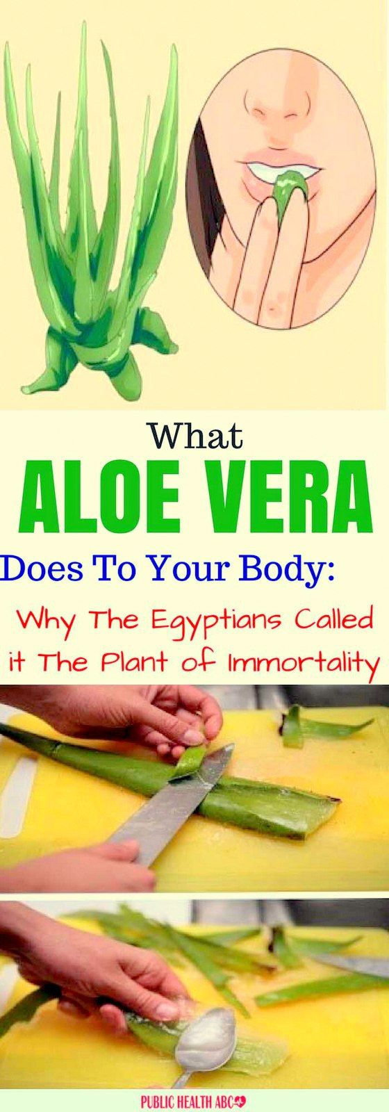 What Aloe Vera Does To Your Body: Why The Egyptians Called it The Plant of Immortality!!!  #beautyti...