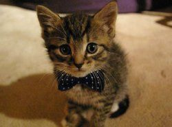 :3 he's got a wittle bow tie :3