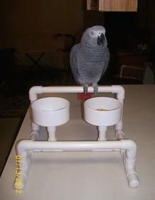 A Table Top Perch That Has Bowls For Your Bird To Enjoy His Own Dinner At