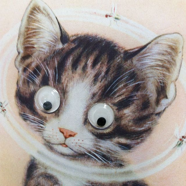 Pussy With Googly Eyes