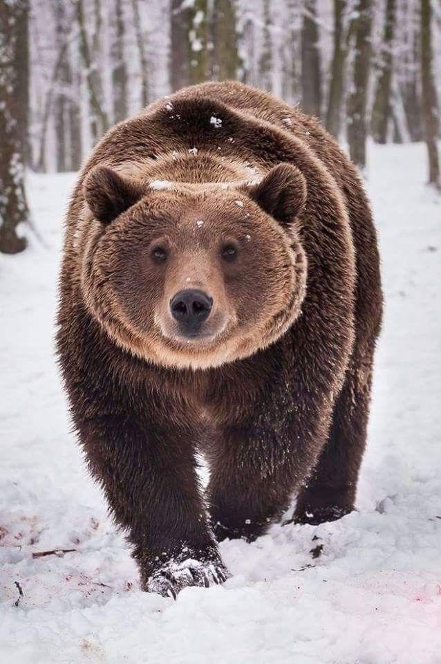 #bears