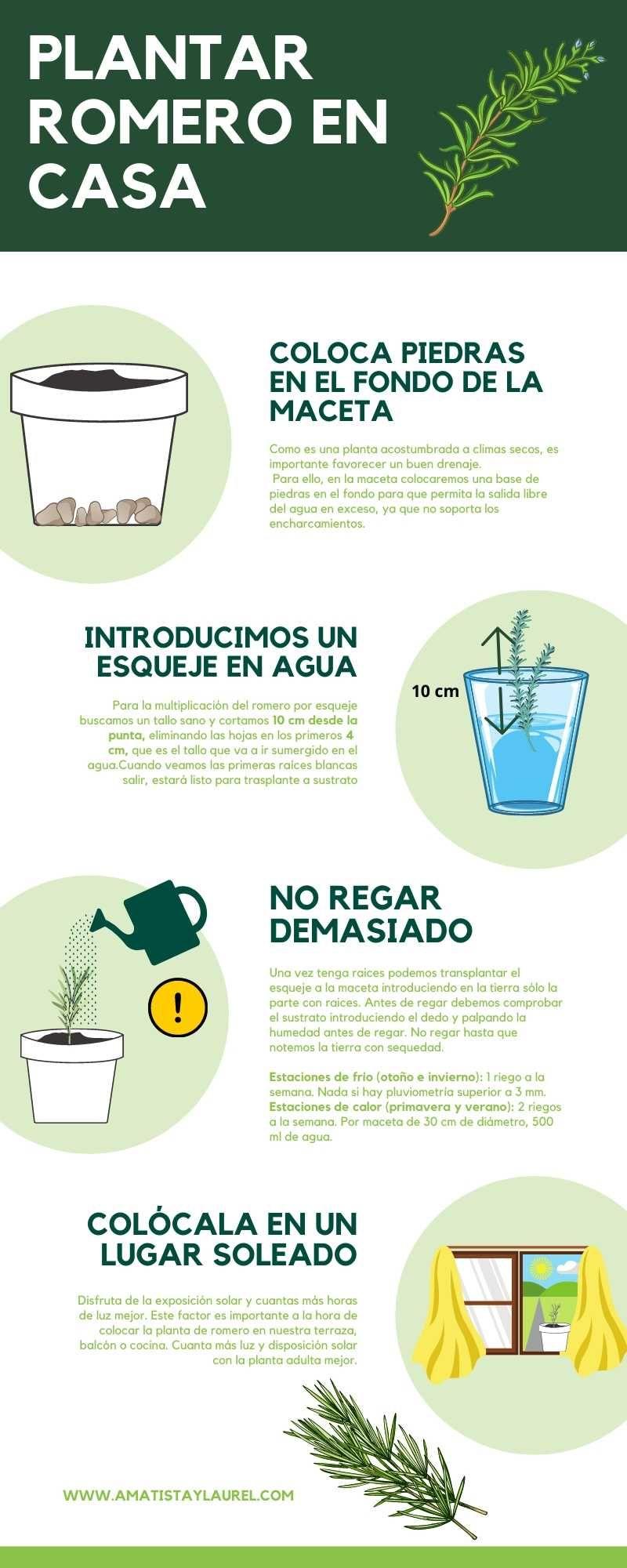 Como Sembrar En Agua