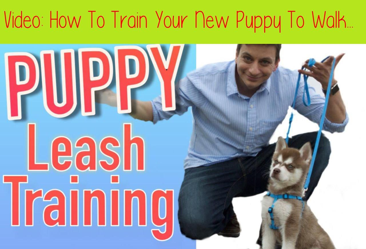 How To Train Your New Puppy To Walk On Leash!Enter code