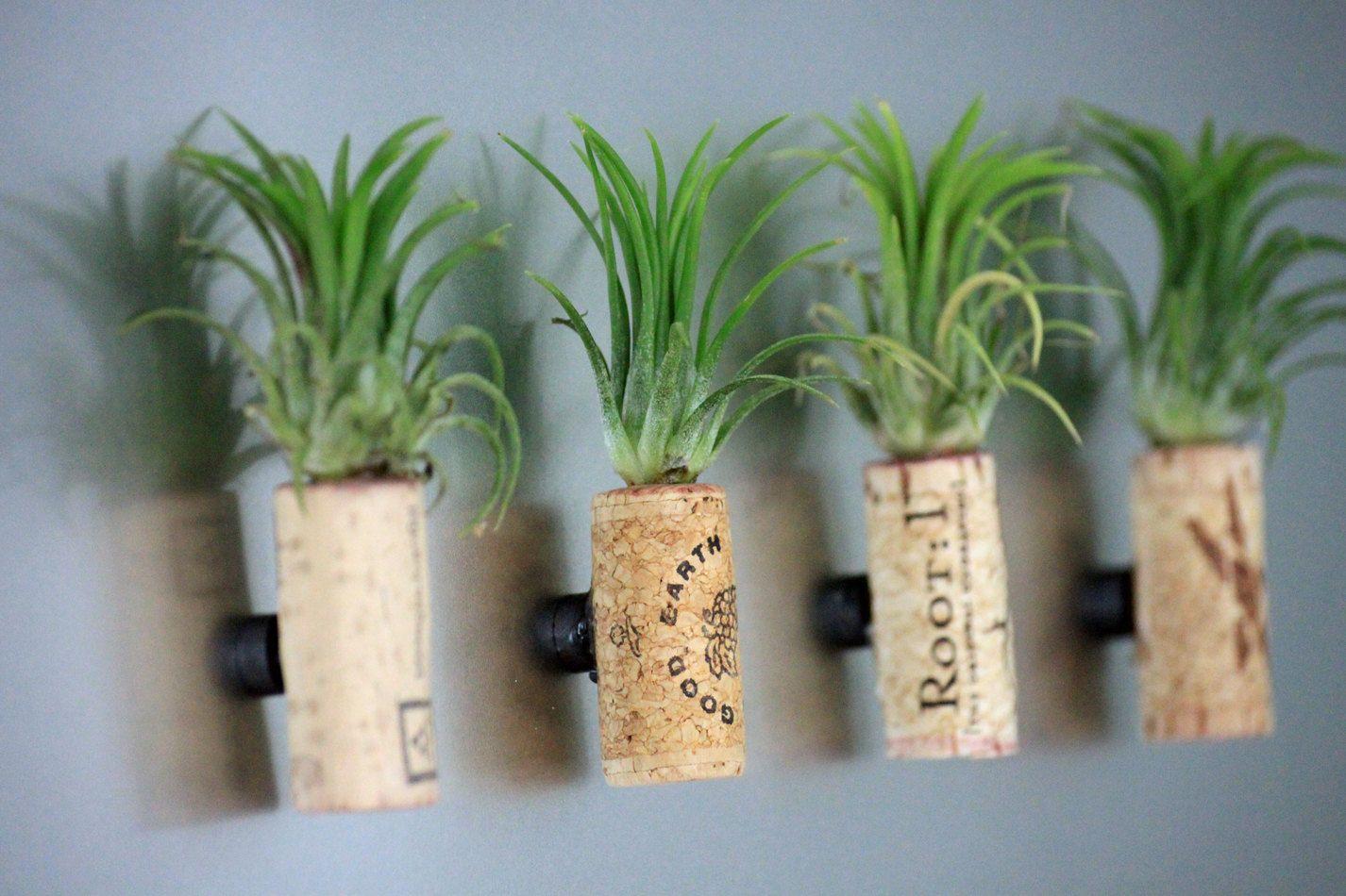 Live Plant Cork Magnet // Living Art // Unique Air Plant Decor