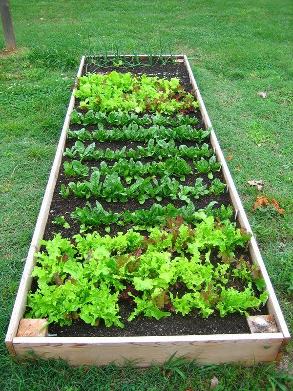 Raised vegetable garden - clever and creative home ...