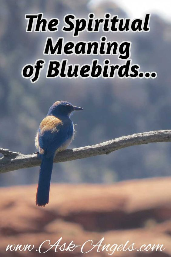 The Spiritual Meaning Of Bluebird Spiritual Meaning Spiritual